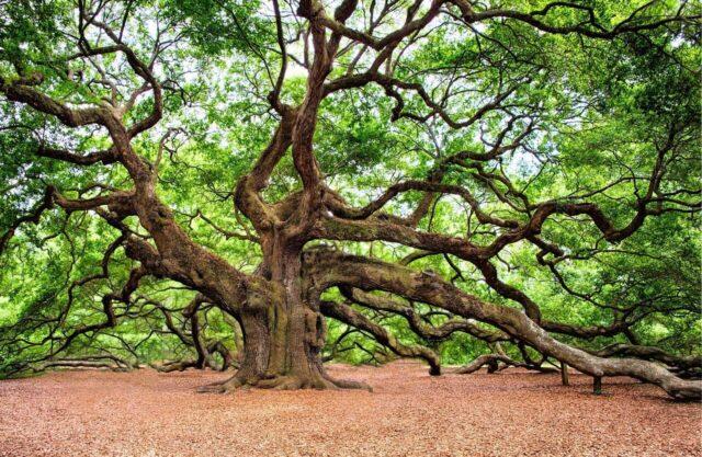 天然 植物概念